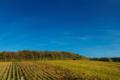 Domaine-Laporte—paysage-DL