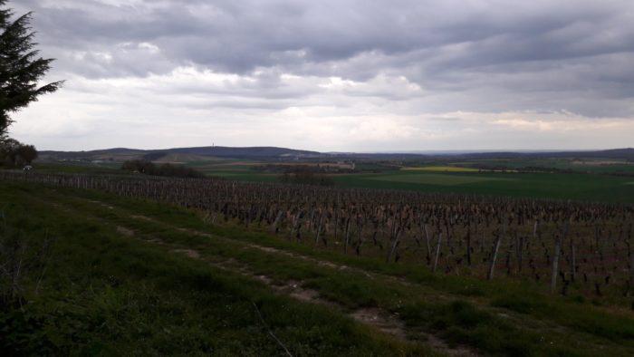 Domaine-de-Sarry-2020–3-