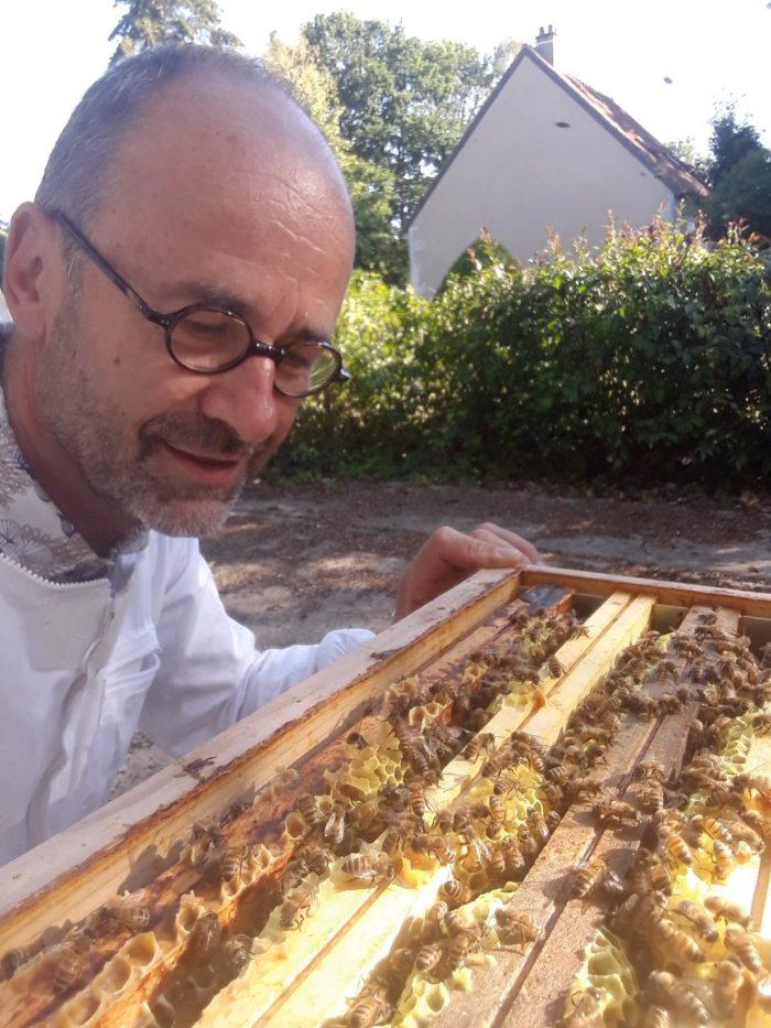Essaim-apiculteur-Delaby-abeilles-rayons-miel