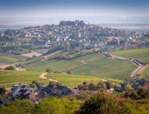 Orchidees-chateau-Sancerre-Christophe-GAGNEUX_DSC6275