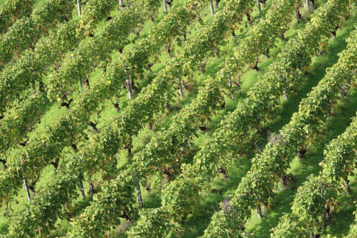 Vignoble-Sancerre-Victoire-Jacquot–36–min