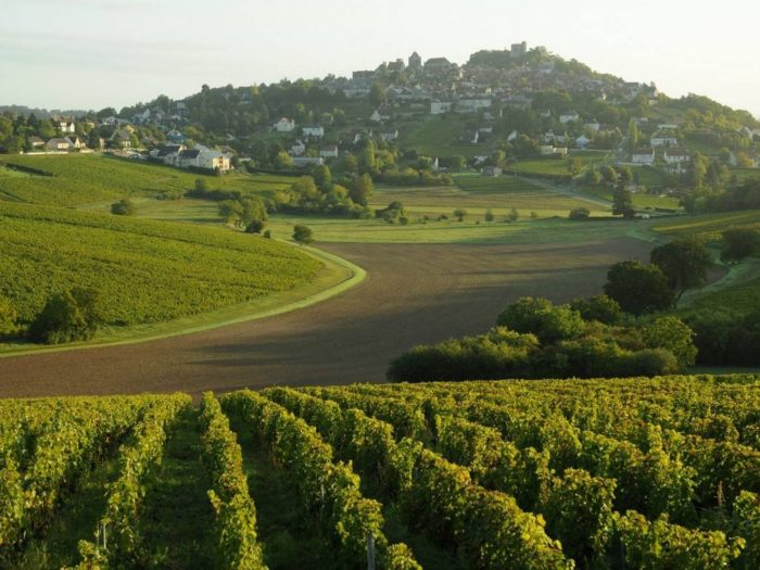 Le vignoble Sancerrois