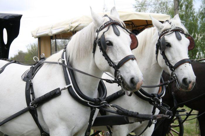 horses-2447840_1920