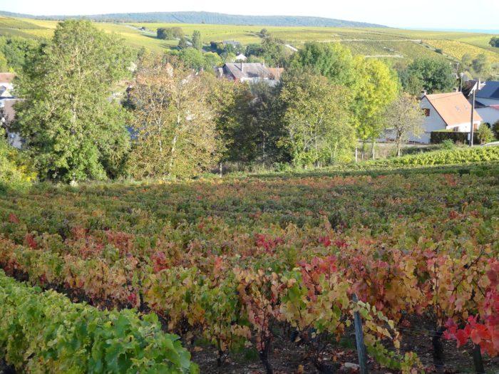 photo-vigne-et-maison-bue–1-