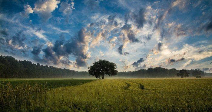 tree-247122-1280